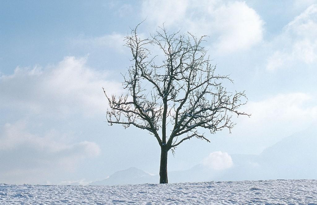 Zen management decisiones en poca de crisis javier for Arboles en invierno