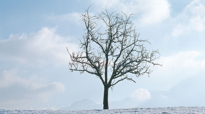 Zen Management: Decisiones En época De Crisis